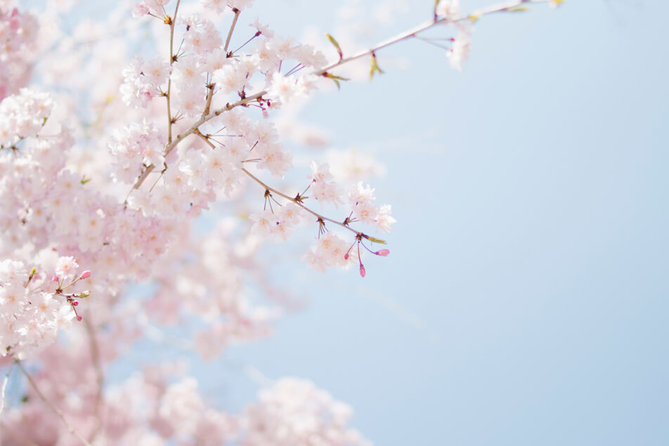 Spring Special Cherry Blossom Facial: Affordable facial & cheap massage in Washington DC